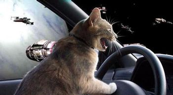 https://mediaproxy.tvtropes.org/width/350/https://static.tvtropes.org/pmwiki/pub/images/funny_cat_pictures_344_1846.jpg