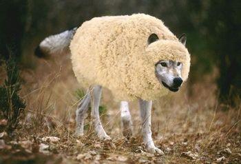 https://mediaproxy.tvtropes.org/width/350/https://static.tvtropes.org/pmwiki/pub/images/wolf-in-sheeps-clothing1.jpg